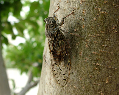 Gordon Rumford Ministries - Daily Devotional - What Good Are Cicadas?