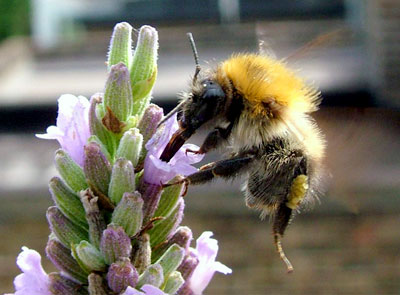 Gordon Rumford Ministries - Daily Devotional - Bumblebees Can't Fly, Or Can They?